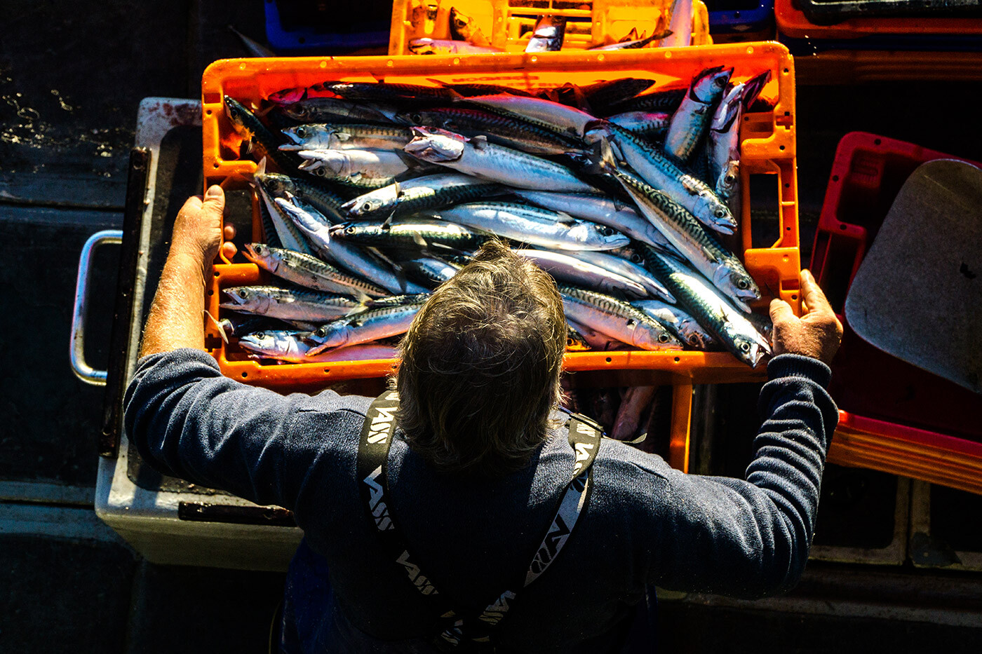 Man holding a tray of freshly caught mackerel